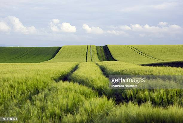 Green fields and path