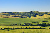 A photograph of green fields and hills in the South Downs in Sussex