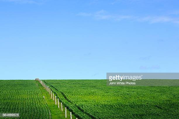 Green fields with a fence. South Australia.