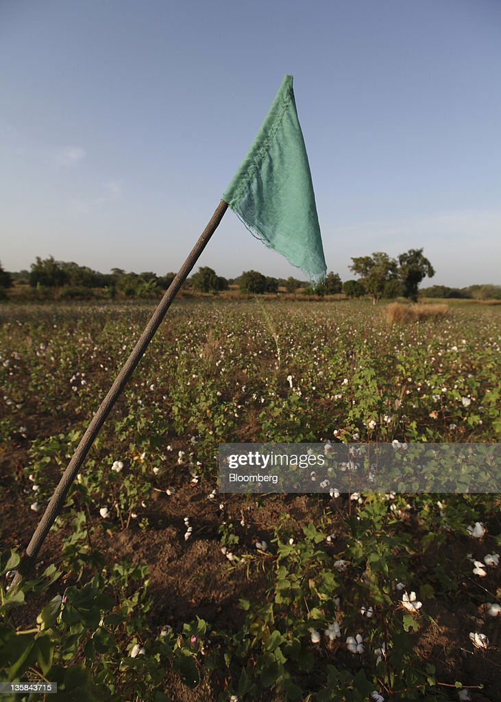 A green flag identifies a field of fair trade organic cotton near Benvar, Burkina Faso, on Saturday, Nov. 12, 2011. In Burkina Faso, one of the poorest countries in the world, where child labor is endemic to the production of its chief crop export, paying lucrative premiums for organic and fair traden cotton has -- perversely -- created fresh incentives for exploitation. Photographer: Chris Ratcliffe/Bloomberg via Getty Images