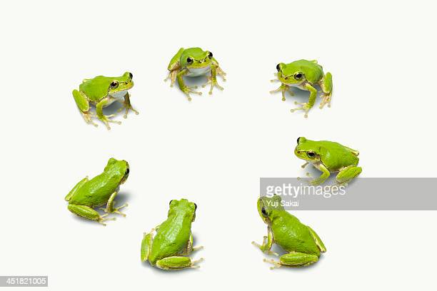 Green flog meeting  in making circle