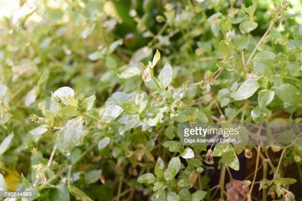 Green Flowers Blooming Outdoors