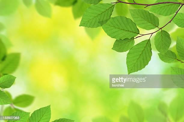Verde fogliame XXXL
