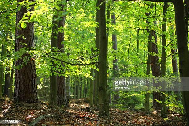 Green forest - defocused background