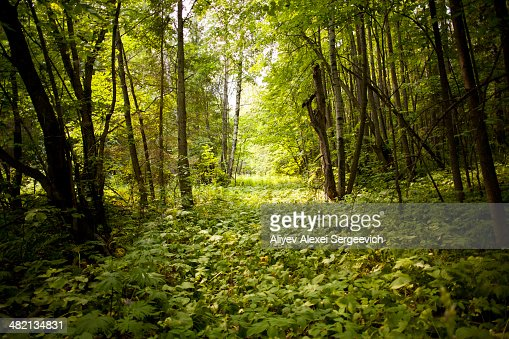 Green forest floor in rural landscape