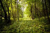 Green forest floor in rural landscape