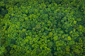 Aerial view down onto vibrant green forest canopy with leafy foliage.