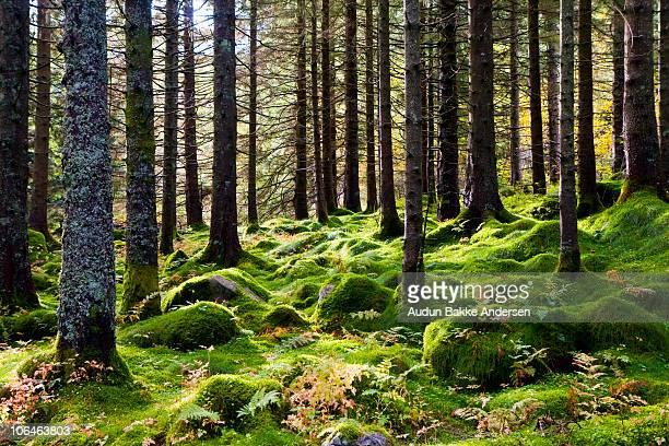Green forest ground