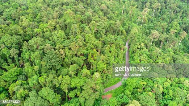 Green forest mountain with road