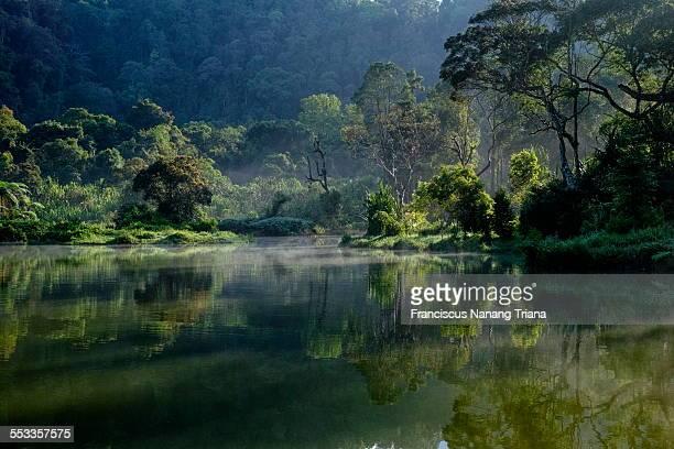 Green forest of Situ Gunung