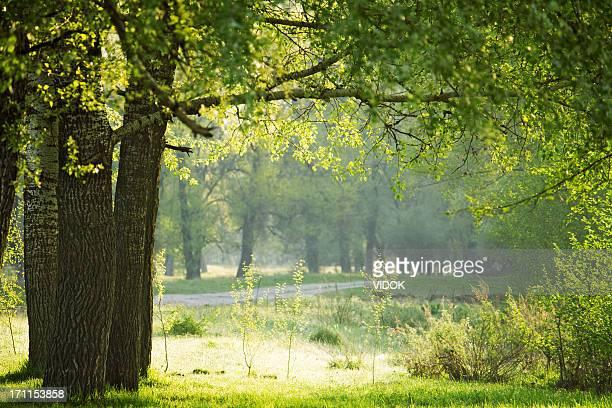 緑の森林にます。