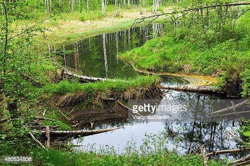green forest summer : Stockfoto