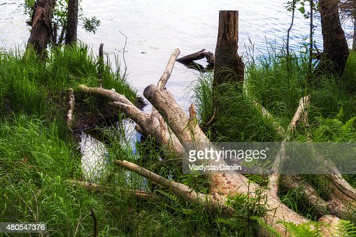 green forest summer : Stock Photo