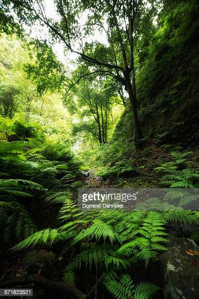 Green forest with fern