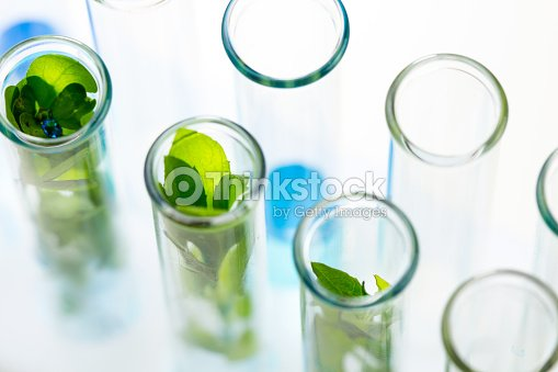 Green fresh plants grown up in test tubes in laboratory. : Stock Photo