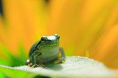 Green Frog on Leaf