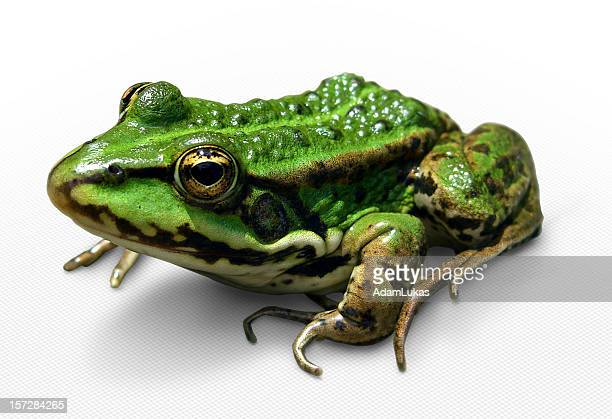 Green frog (with clipping path)