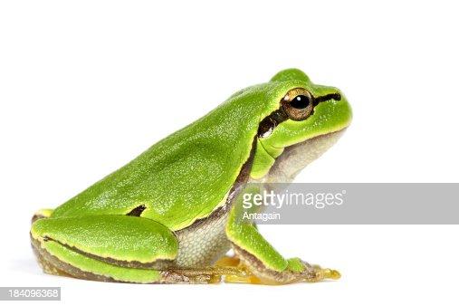 V Frog Kpm Frog Stock Phot...