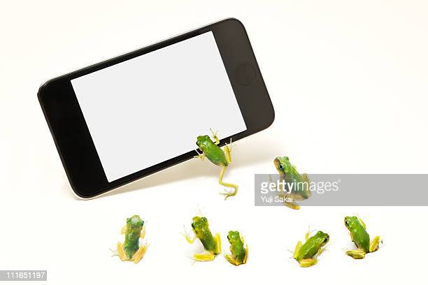 Green frogs and smart phone
