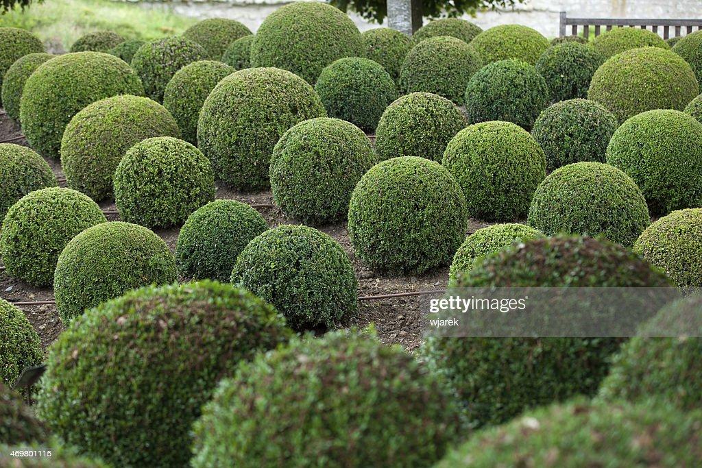 Green Garden Balls In France, : Stock Photo