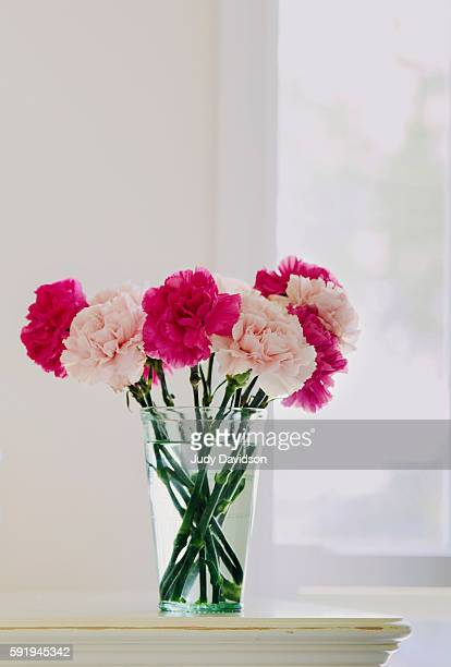 Green glass full of pink carnations on dresser near window