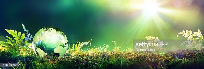 Grün Globus auf Moos-Envinronmental Konzept : Stock-Foto