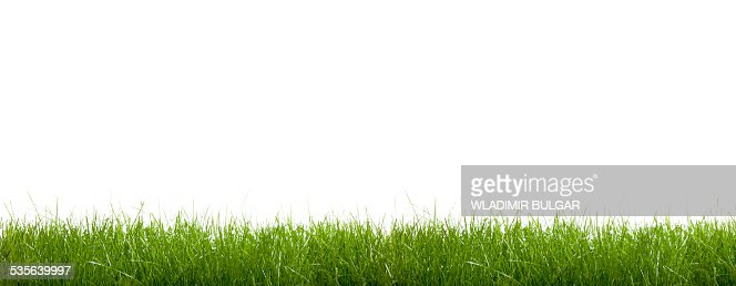 Green grass against a white background