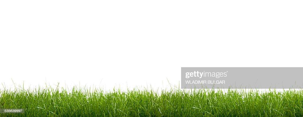 10-603810-Green Grass On White Background. Matte Channel. | Divine ...