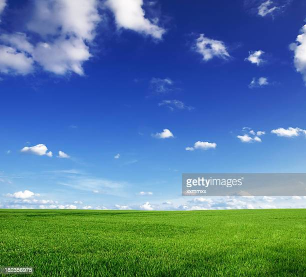 Green grass and blue skies with a few clouds