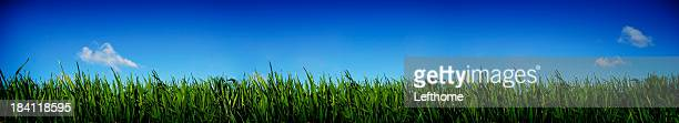 Green Grass and Blue Sky 2