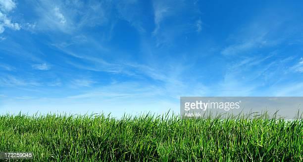 Green Gras und blauer Himmel