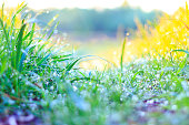 green grass and fresh dew , spring season, beauty