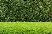 green grass and hedge background