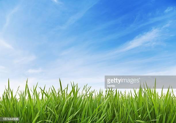Grünes Gras und Himmel XXXL 70 mpx