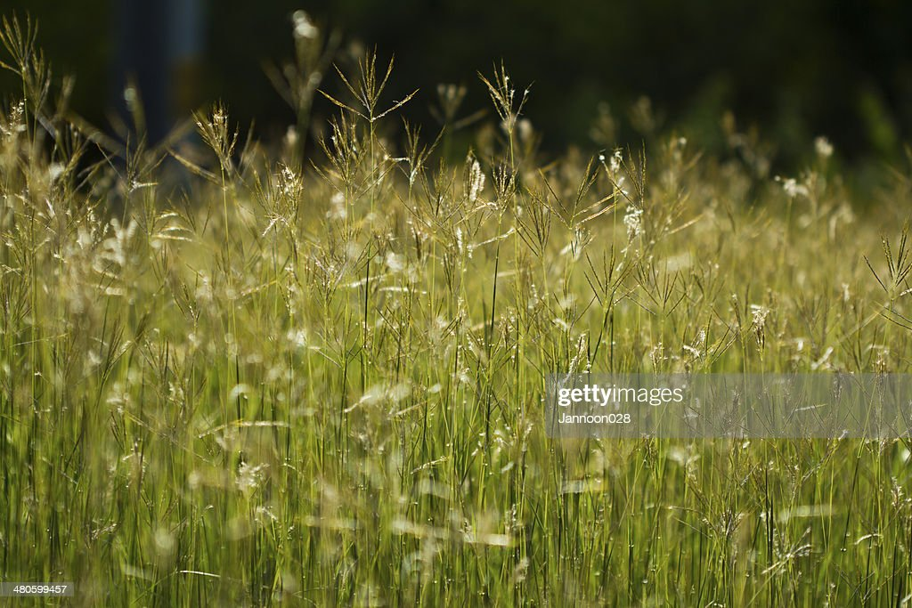 green grass and sun : Stock Photo