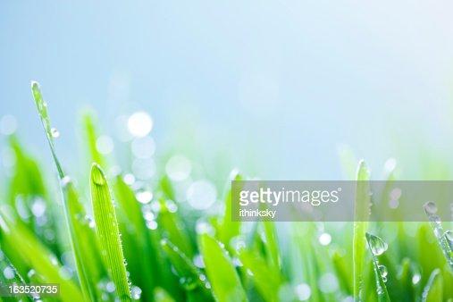 Fundo de relva verde