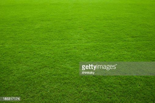 Fond vert herbe