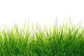 Beautiful green grass background.