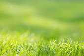 Abstract green grass background with bokeh effect with place for copy. Can be used as a postcard template.