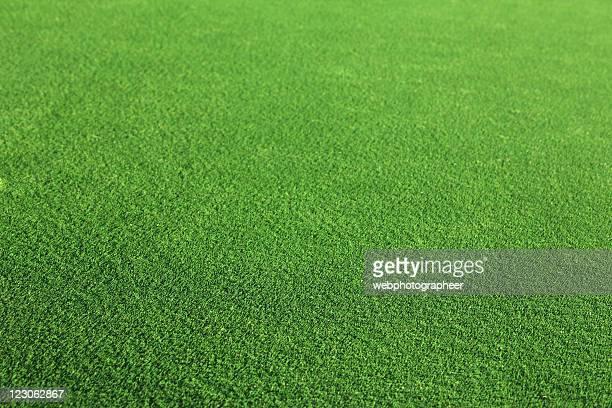 Green grass background XXL