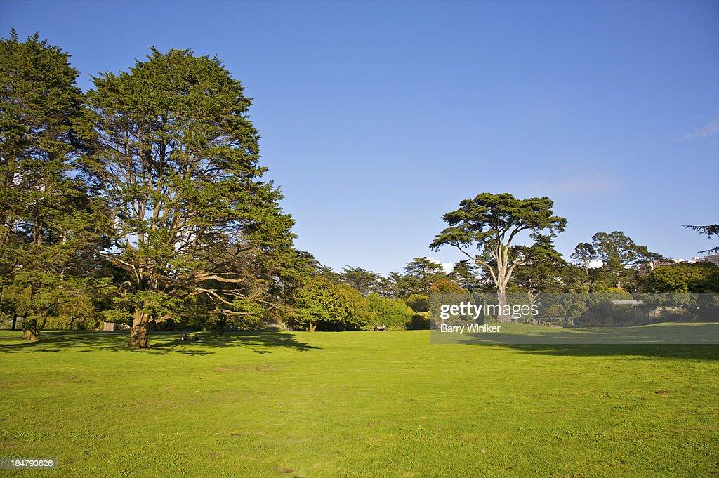 Green grass below mature specimen trees stock photo for Specimen trees