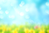 Summer natural blurred background.Green grass blue sly backdrop.
