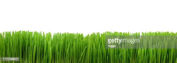Relva verde limite