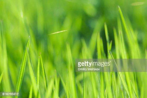 Relva verde Plano aproximado. : Foto de stock