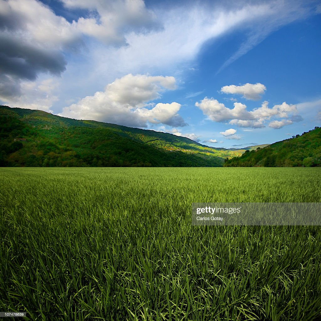 Green grass field : Stock Photo