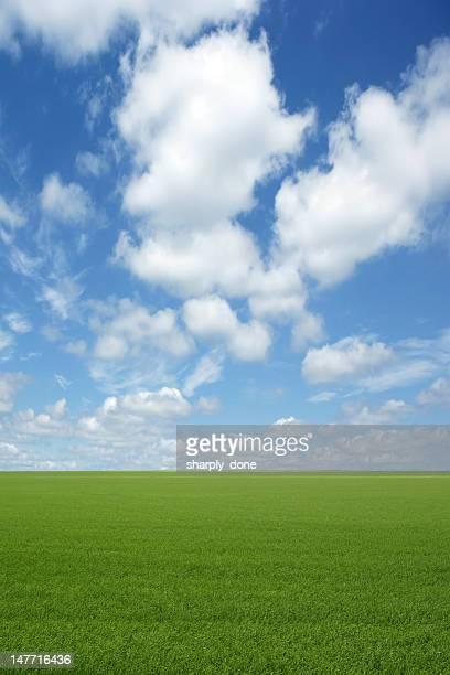 XXXL 緑の芝生フィールド