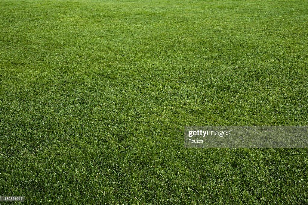 grass field texture. Green Grass Field : Stock Photo Texture E