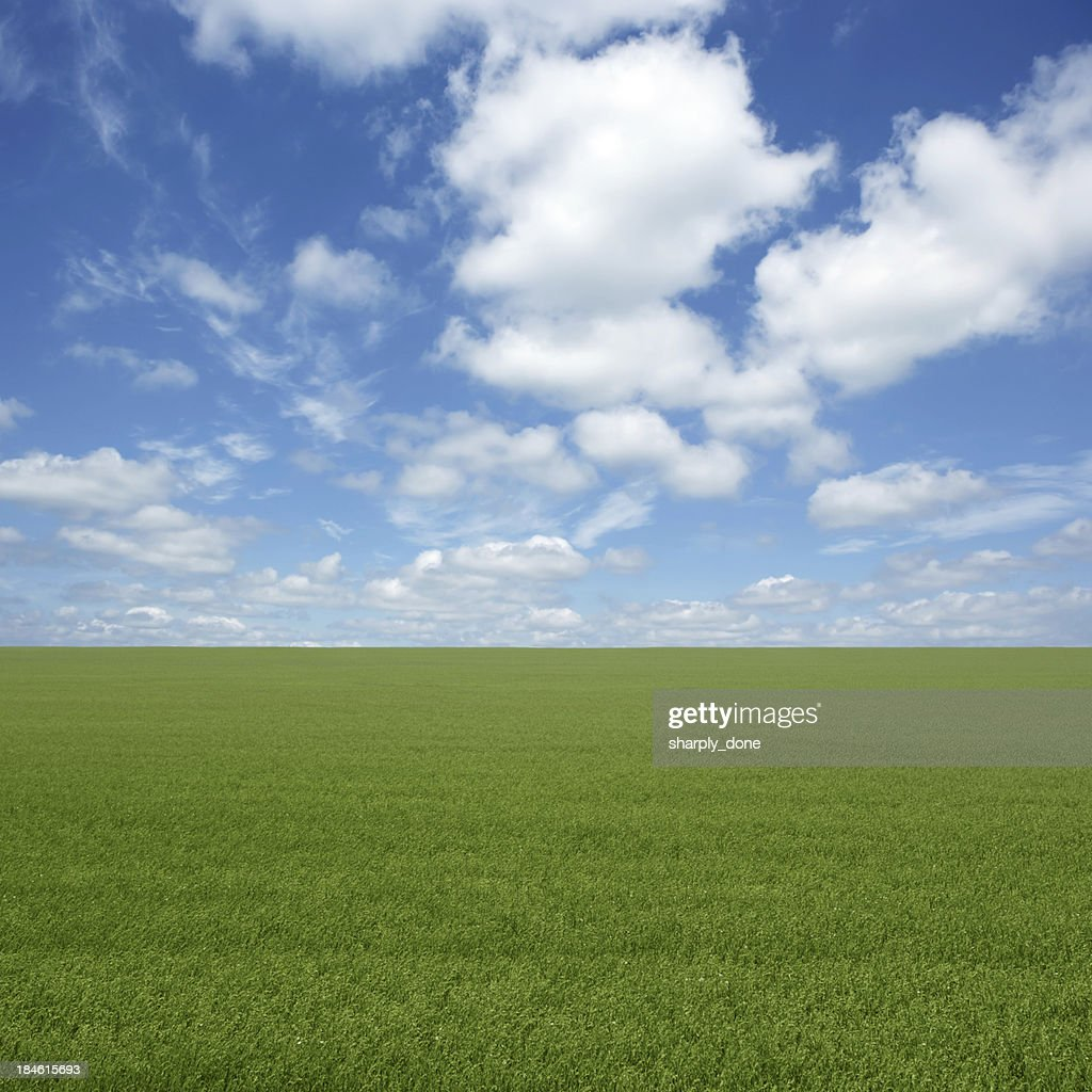 XXL green grass field