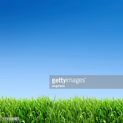 XXXL green grass field - with many copyspace