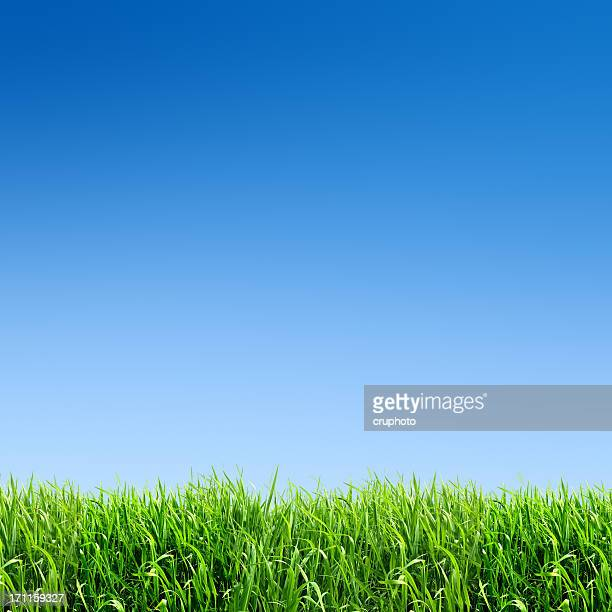 XXXL green grass field - with many copyspace